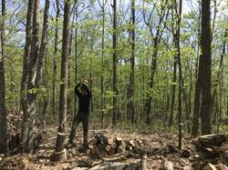 森を見てほしい。
