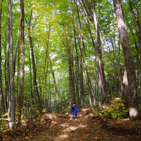 森林作業道開設