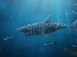 What is a swarm organization?