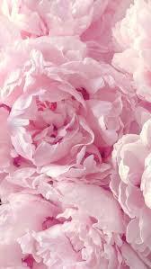 Peony - Pink