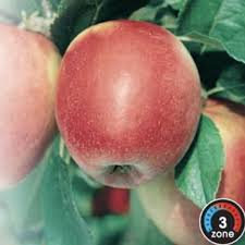 Apple - Norland