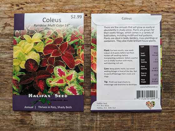 Coleus - Rainbow Multi Color