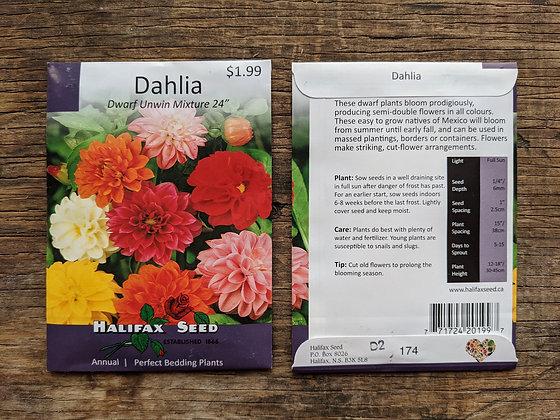 Dahlia - Dwarf Unwin Mix