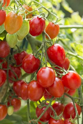 Tomato - Fantastico