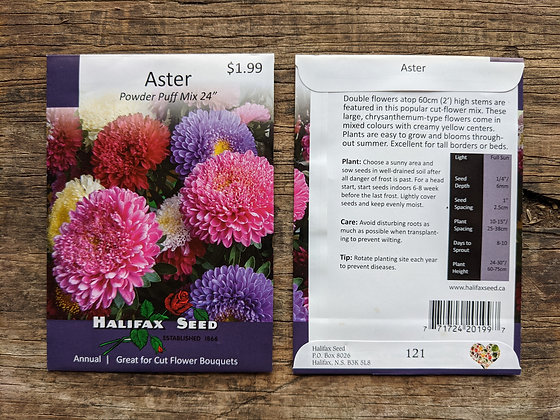 Aster - Powder Puff Mix