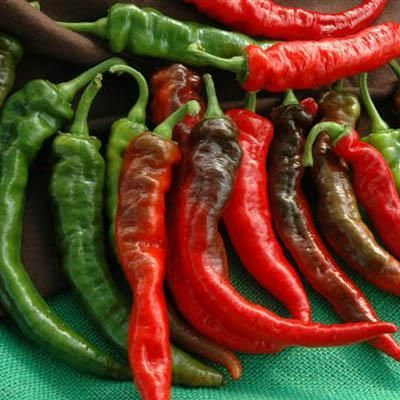Pepper - Arapho cayenne (hot)