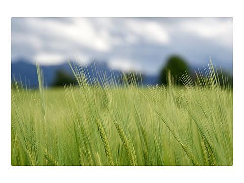 Felder über Aibling zum Wendelstein 1