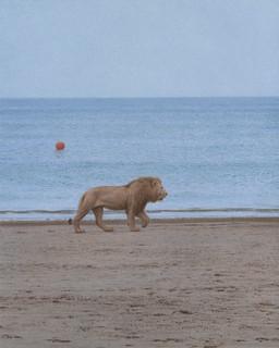 Löwe am Meer
