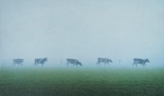Kühe im Nebel II