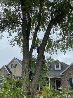 Tree trim 2