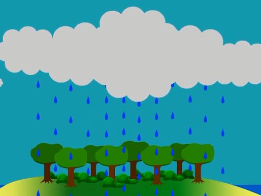 Rừng đem mưa trên đất liền thế nào và góc nhìn với canh tác nông nghiệp.