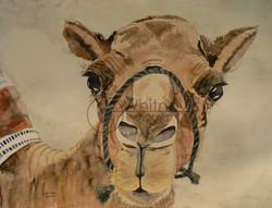 Friendly Camel, Watercolor
