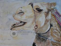Talking Camel, Watercolor