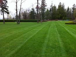 Lawn Care Services (Large Yard)