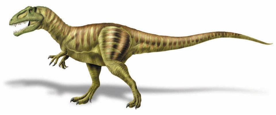 Gigantosaurus+Carolini