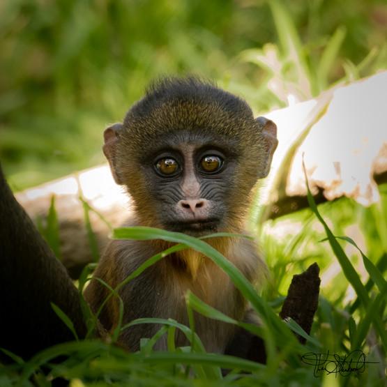 Baby Brown Eyes - Denver Zoo