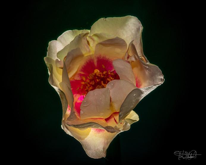 Flower a Glow