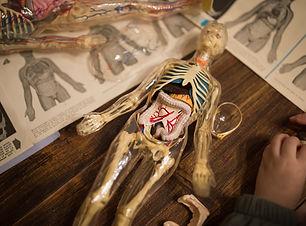 corps humain.jpg