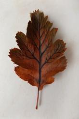 Tree on leaf 1