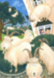 Llandudno goats home edited (2).jpg