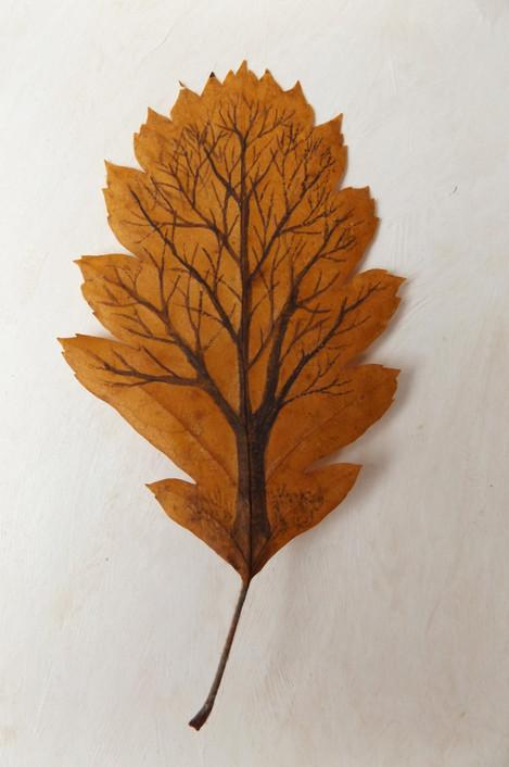 Tree on leaf 2