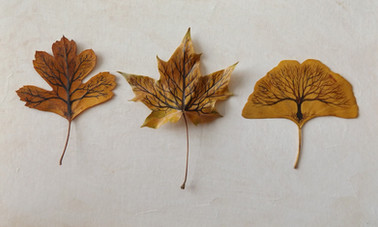Trio of trees on leaves