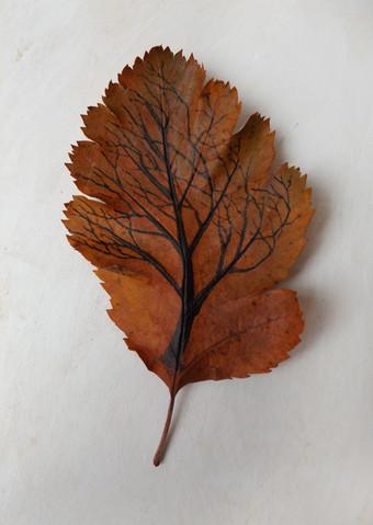 Tree on leaf 3