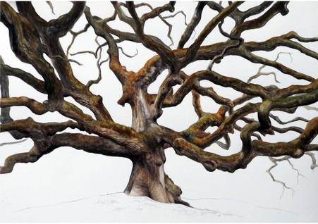 Quercia di Pinocchio - Oak of the Witches