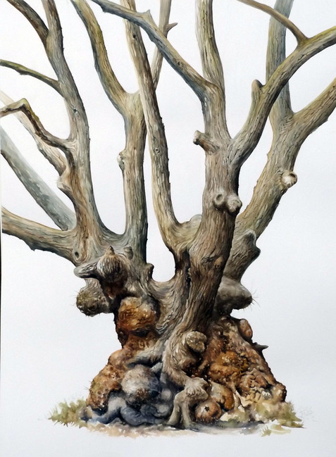 Knobbly oak