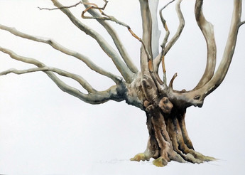 Hornbeam tree 1