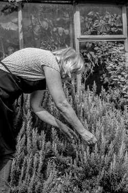 Mary picking rosemarry de la torres.jpg