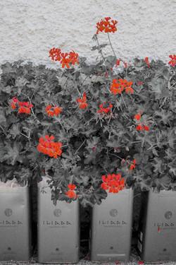 flowers outside de la torres.jpg