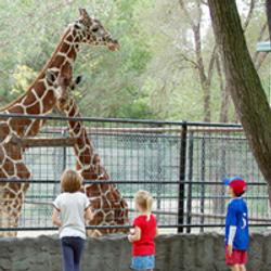 Giraffe_Thumb1