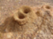 formicary-166566_1920.jpg