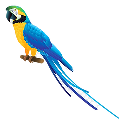 8-83224_blue-parrot-png-clipart-blue-and