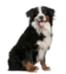 sitting-dog-white-background-4.jpg