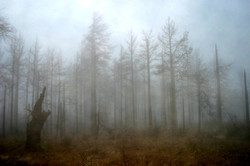 foggy+julian.jpg
