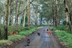 animals in road.jpg
