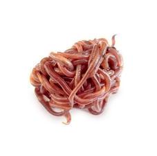 Drift Worms