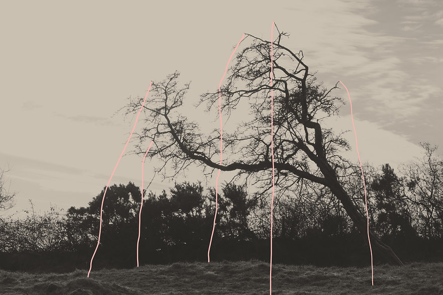 trees and pink lines .jpg