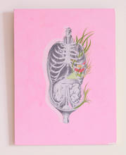 Male organs