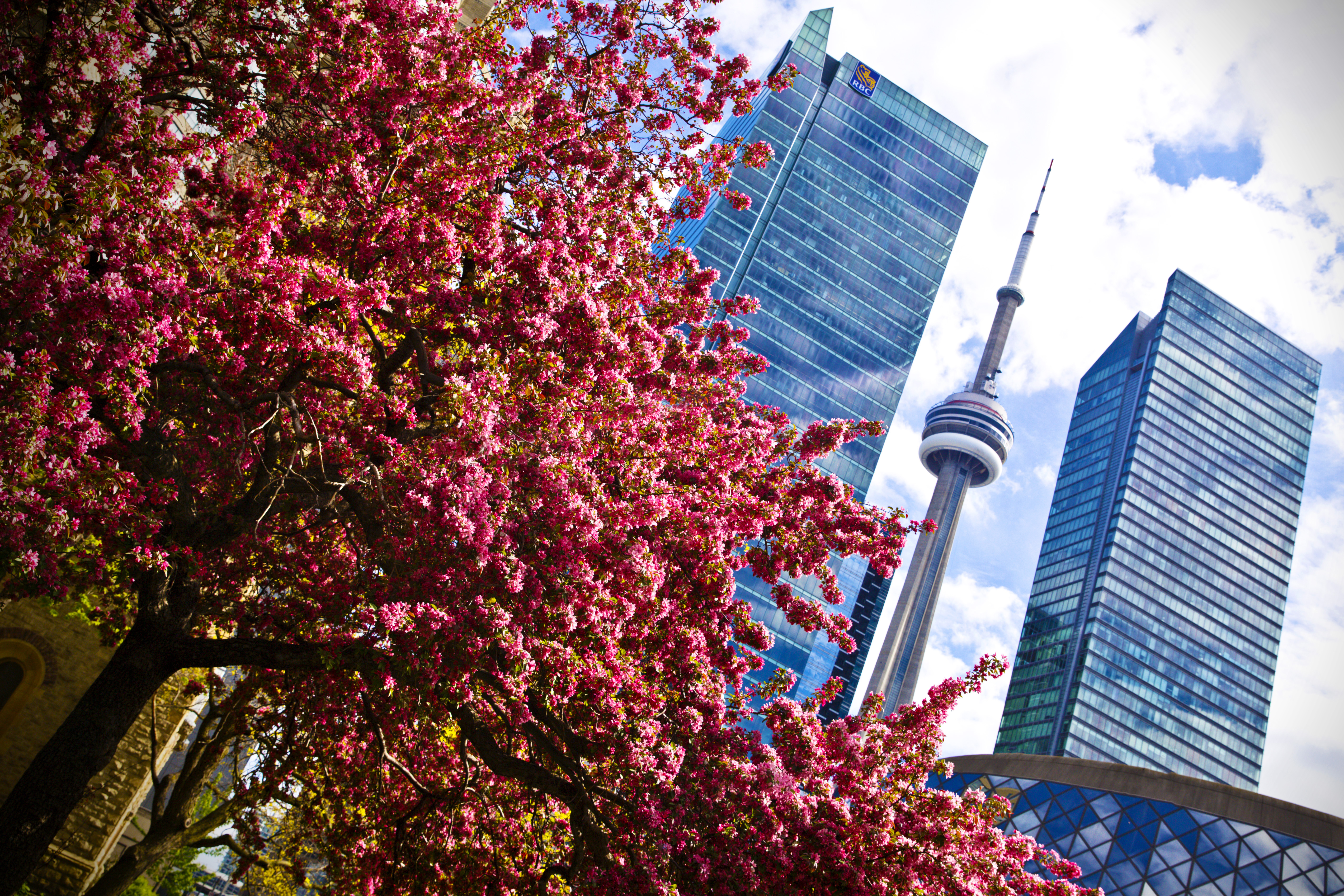 CN Tower/King West
