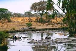 Pond of Hippopotamuses