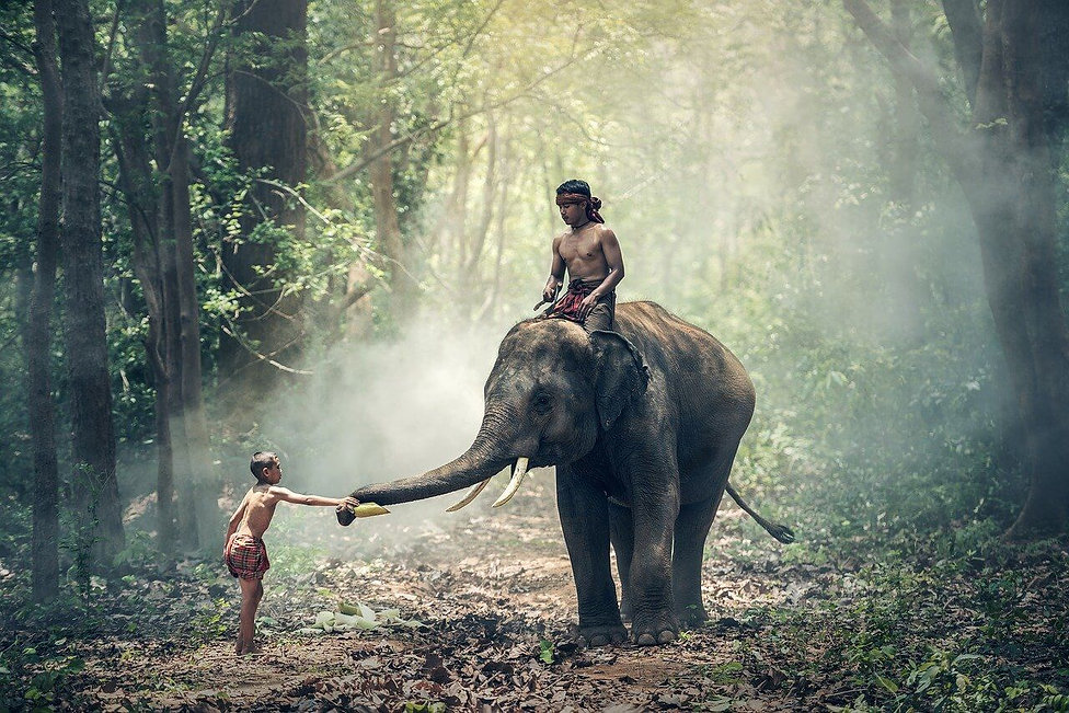 elephant-1822481_1280.jpg