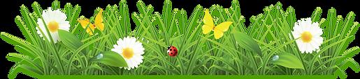 Цветы на поляне