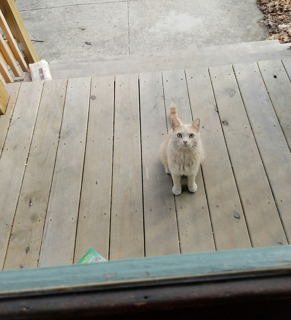 cat on porch