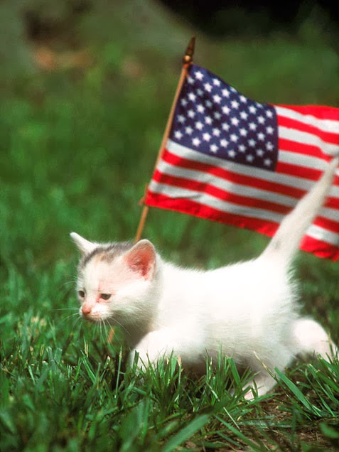 kitten and American flag on the grass