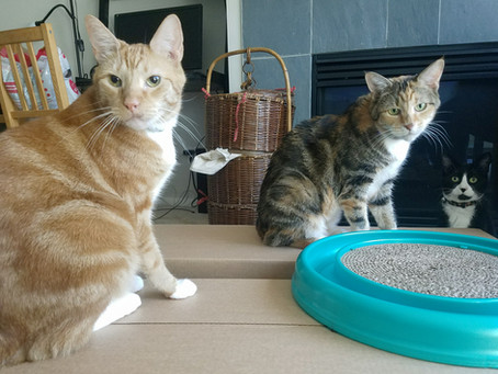 Seattle Cats (Feline Friday Series)