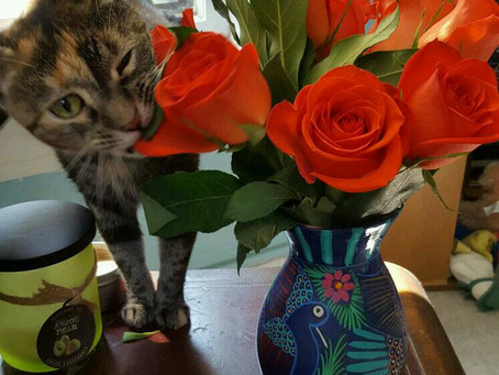 Easter Lilies - Just Say No! (Feline Friday series)