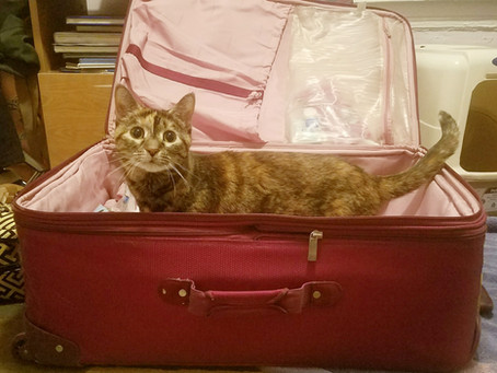 Time to Pack: Vacation or Guilt Trip? (Feline Friday Series)